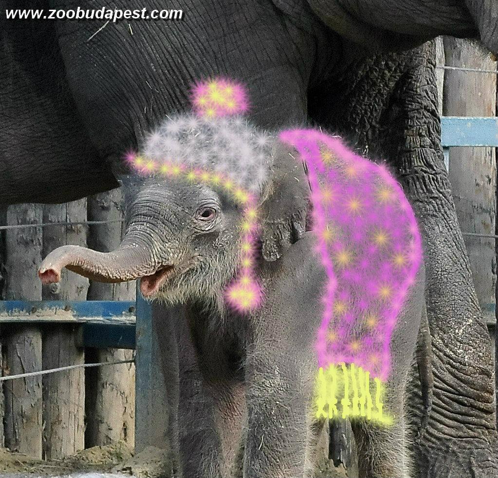 Elefantbaby aus Budapest