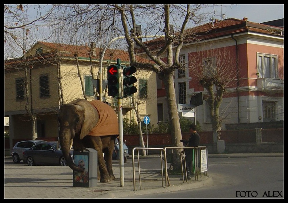 Elefante all'incrocio