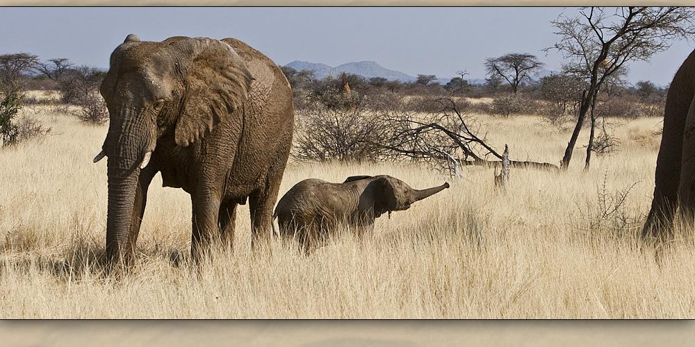 elefanten 12