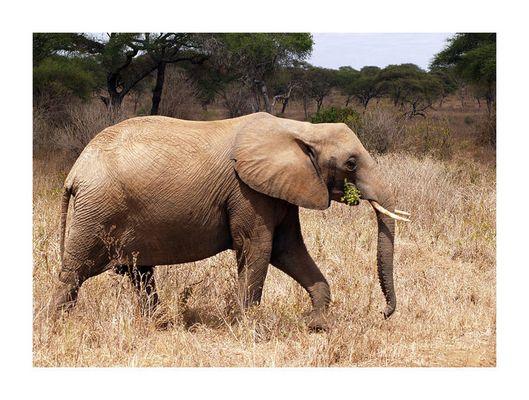 Elefanten....