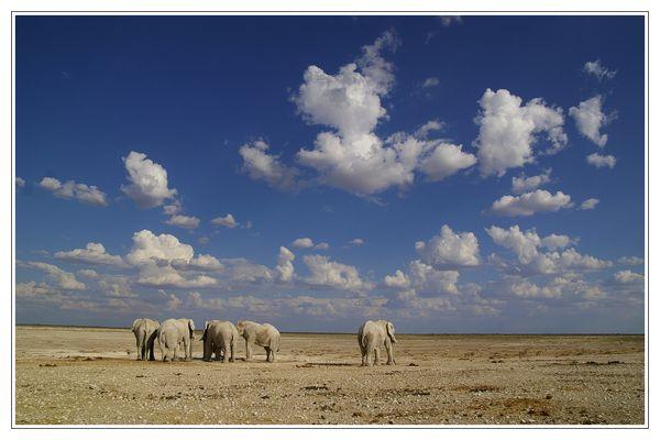 Elefanten... 2