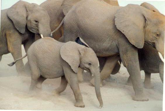 Elefanten !