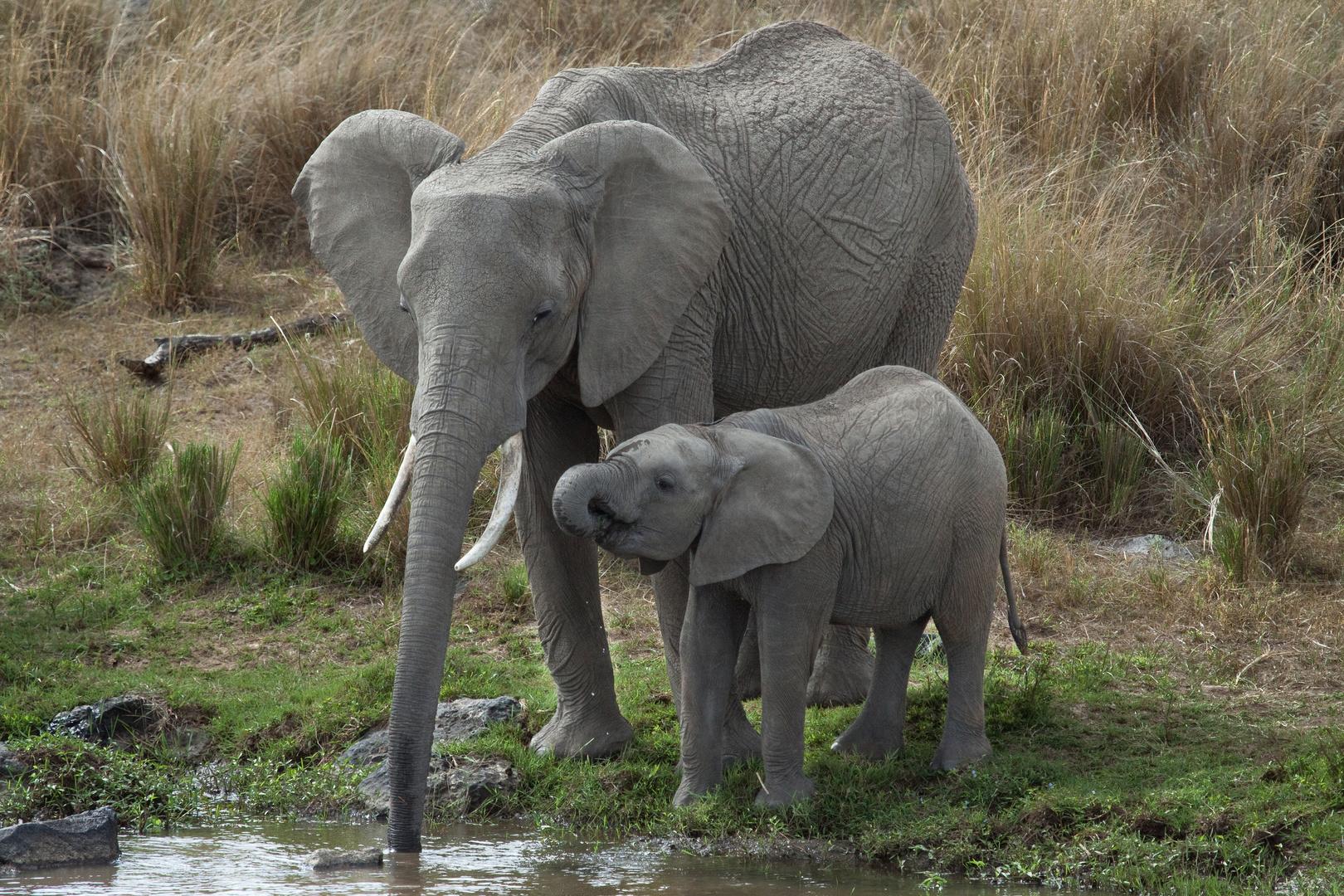 Elefanten am Mara River