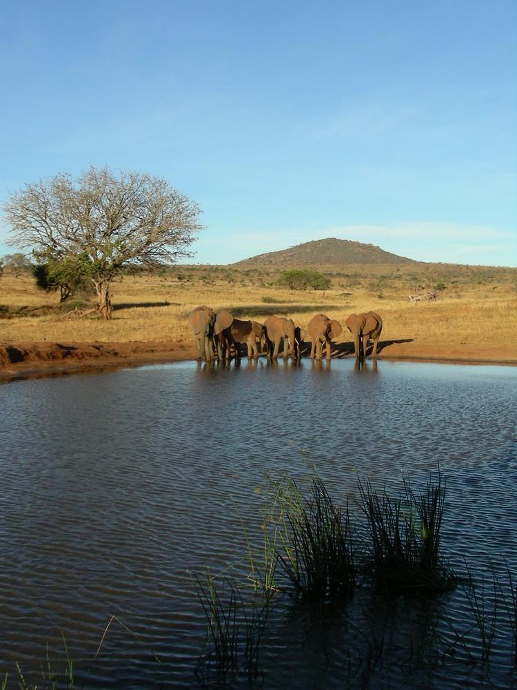 Elefanten am Wasser