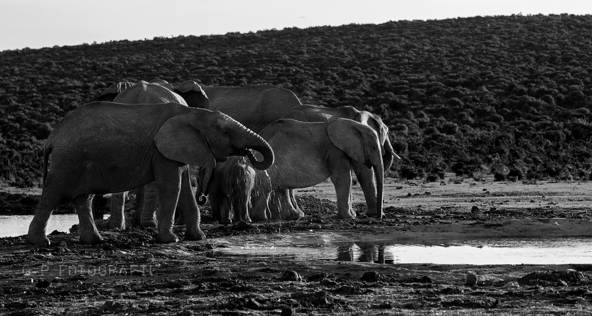 Elefanten am Wasserloch | Addo NP | South Africa