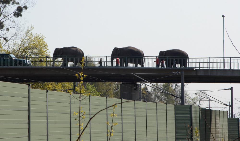 Elefanten auf der Bahnbrücke