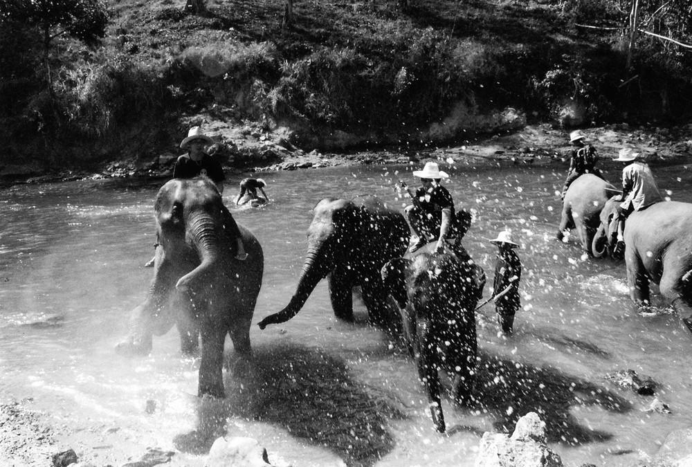 Elefanten Aufstand