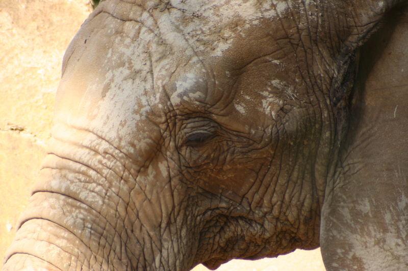 Elefanten aus dem Ausburger Zoo