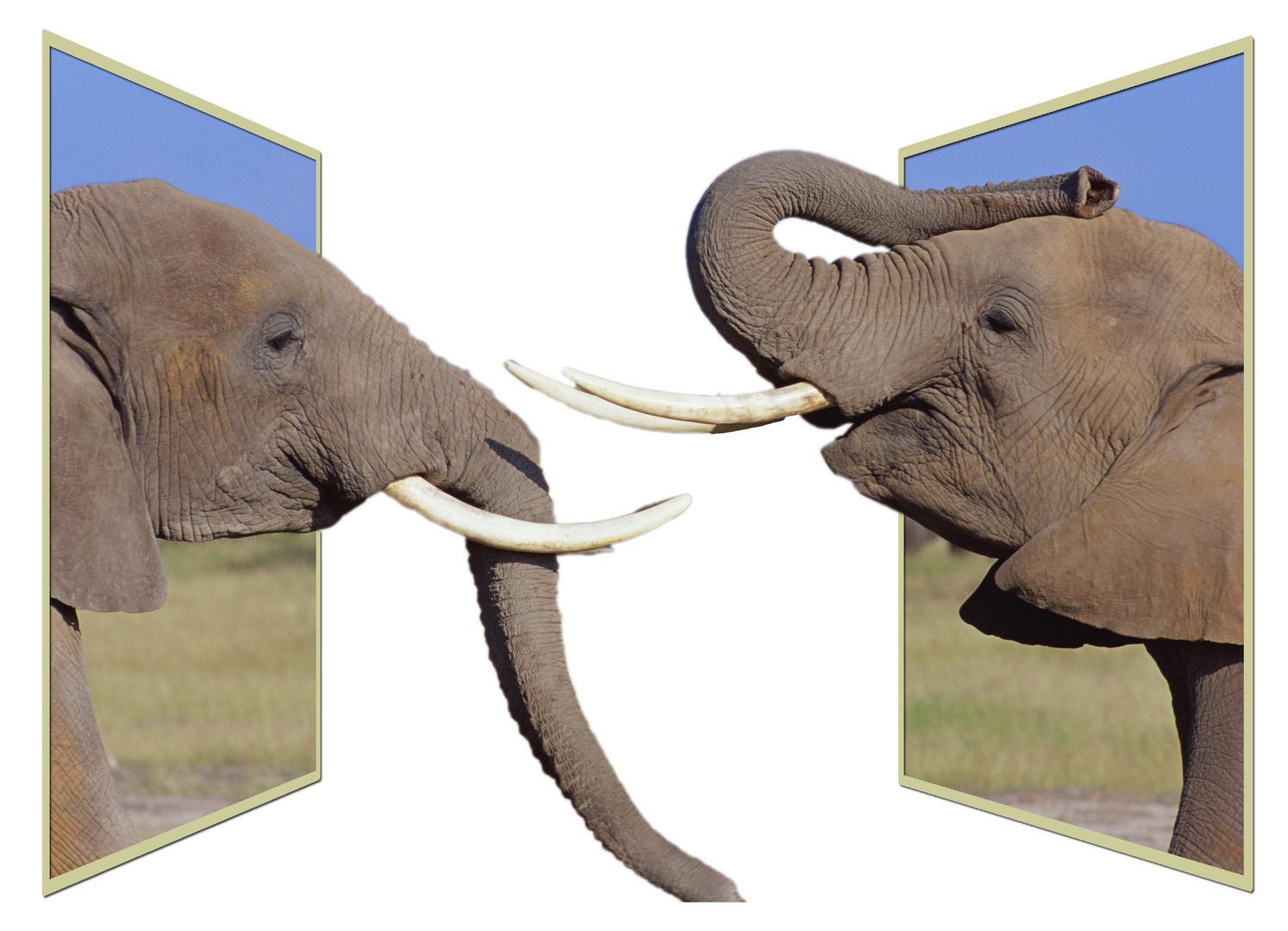 Elefanten - Aus dem Rahmen