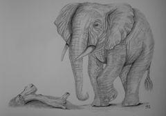 Elefanten-Bulle...