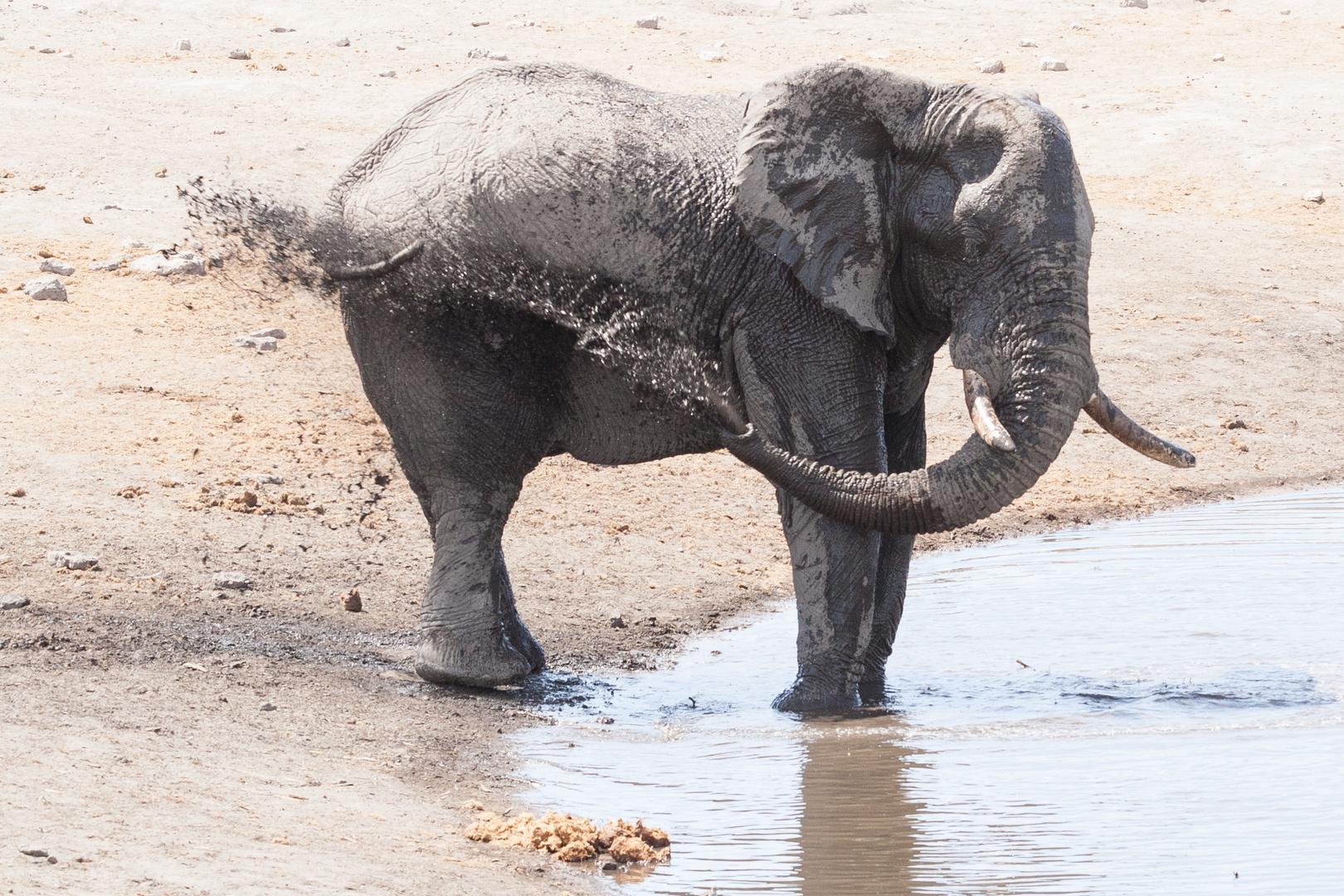 Elefanten-Dusche