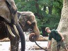 Elefanten Dusche mit...