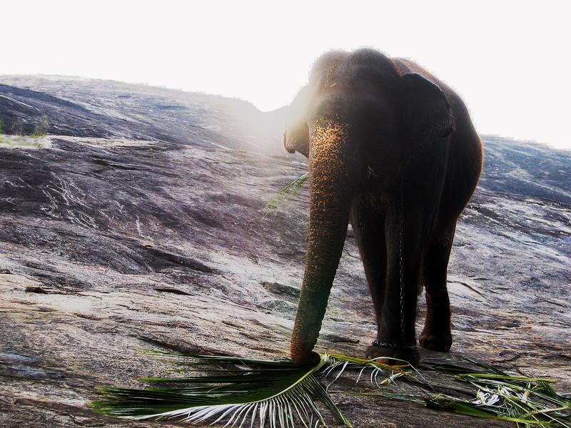 Elefanten-Frühstück