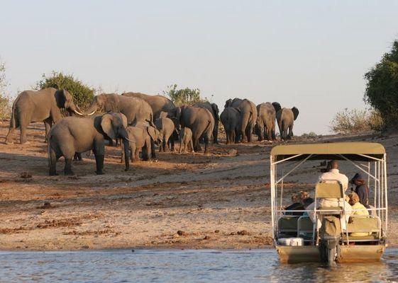Elefanten im Chobe Nationalpark / Botswana