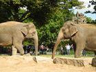 Elefanten im Dialog
