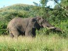 Elefanten im Hluhluwe Game Reserve 2