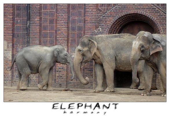 Elefanten im Leipziger Zoo