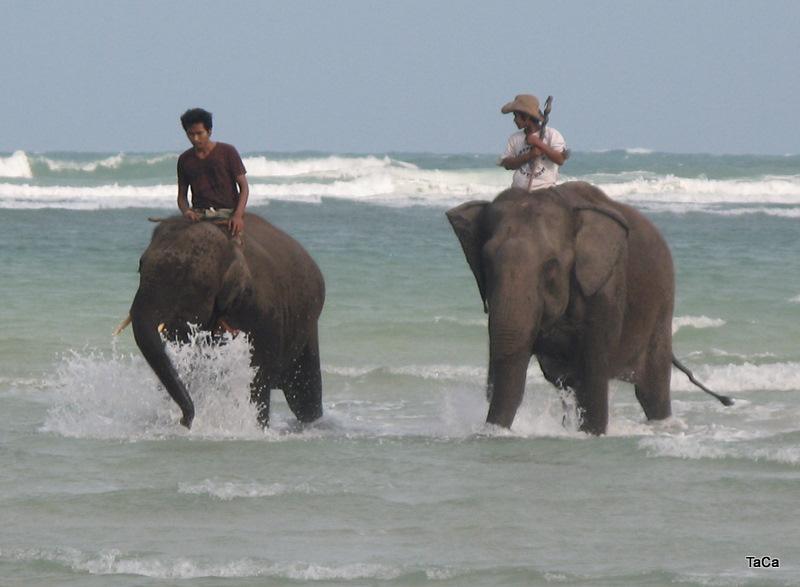 Elefanten im Meer