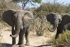 Elefanten im Ruaha NP