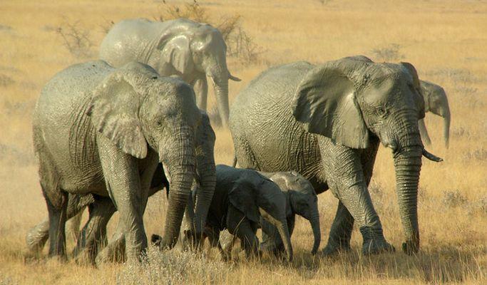 Elefanten im Sonnenlicht