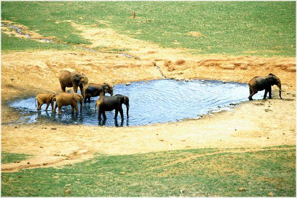 Elefanten in der Badewanne