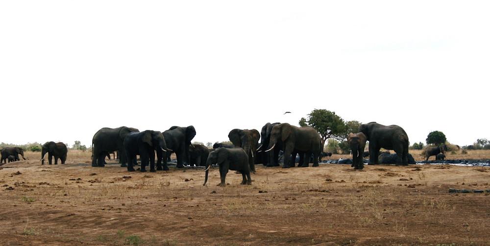 Elefanten in der Freiheit