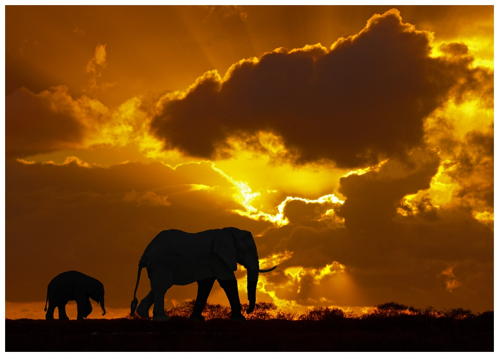 elefanten in der savanne foto bild tiere. Black Bedroom Furniture Sets. Home Design Ideas