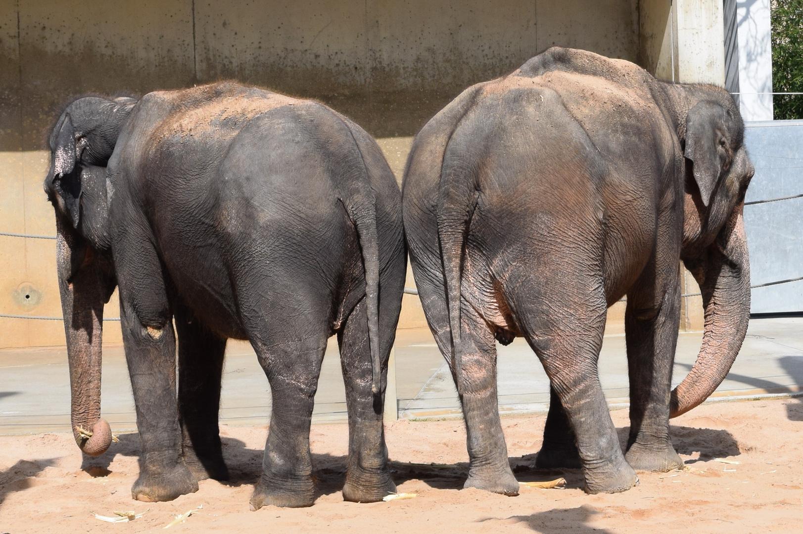 Elefanten in der Wilhelma