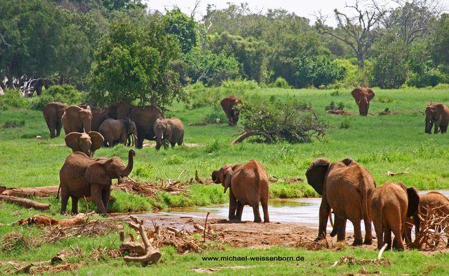 Elefanten in grüner Landschaft