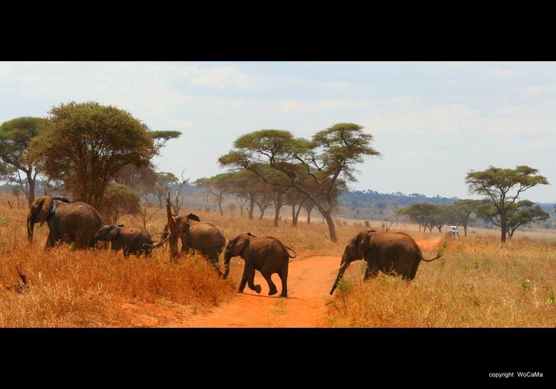 Elefanten Karawane