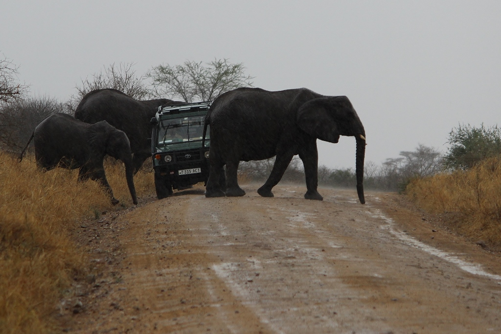Elefanten kreuzen