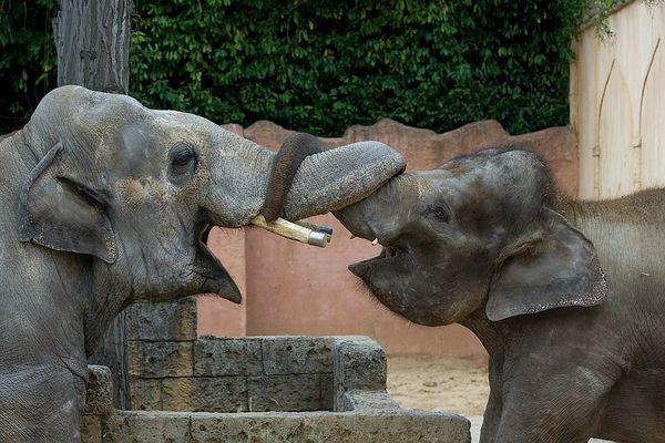 Elefanten-Makramee