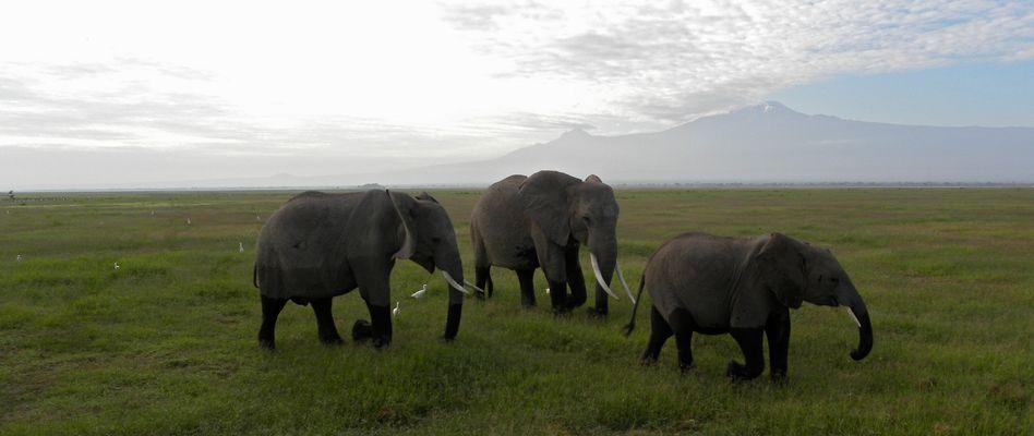 """Elefanten mit """"Strümpfen"""" :-)"""