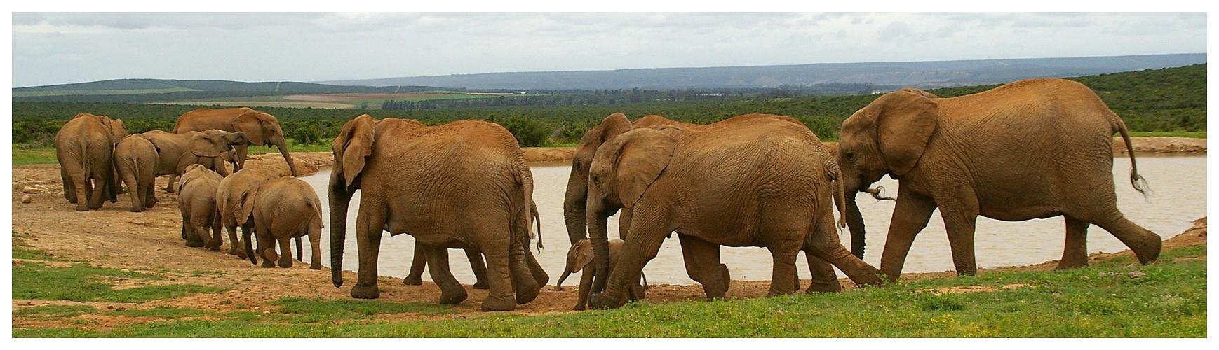 Elefanten-Parade (Reload)
