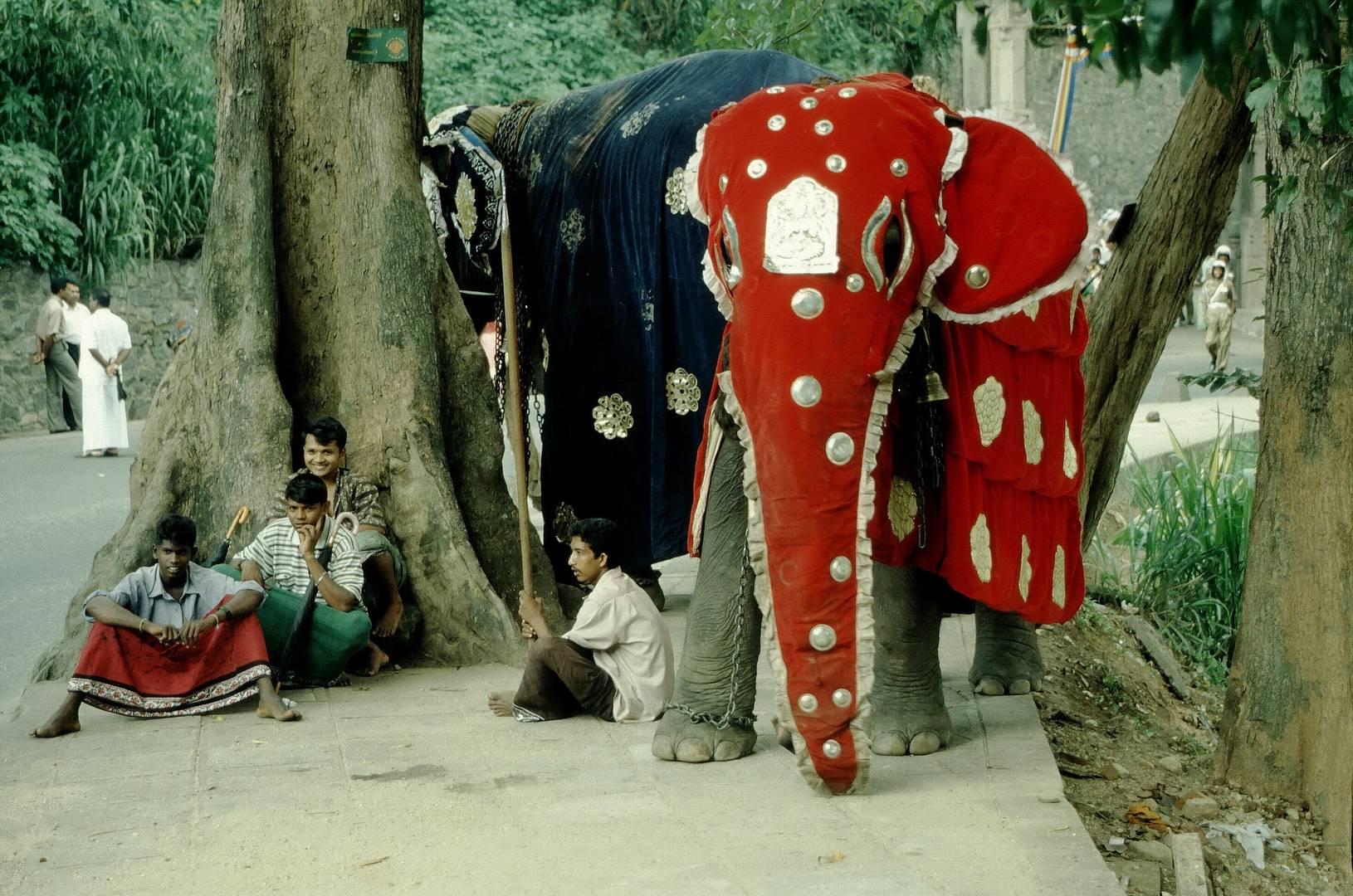 Elefanten Rot und Blau