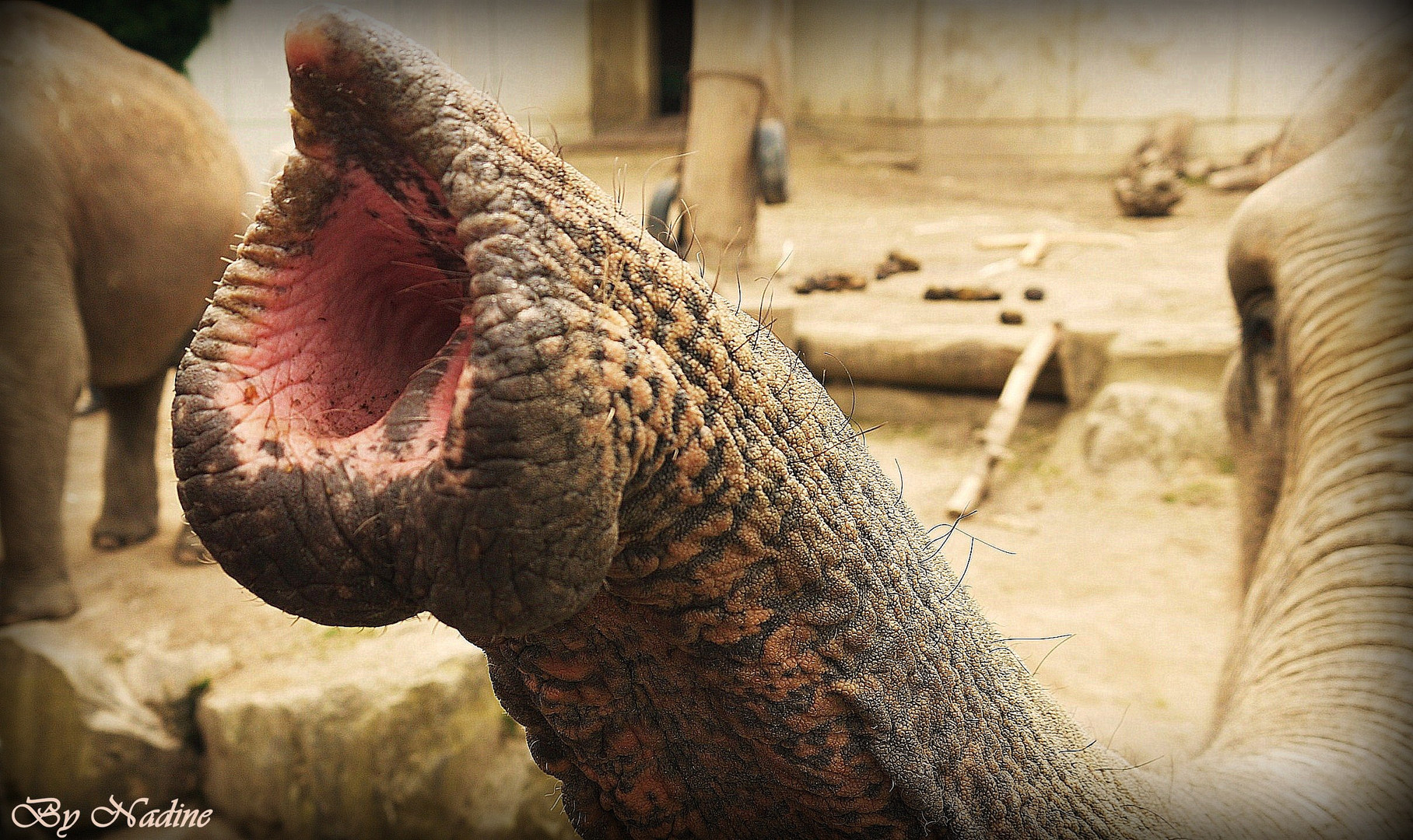 Elefanten Rüssel