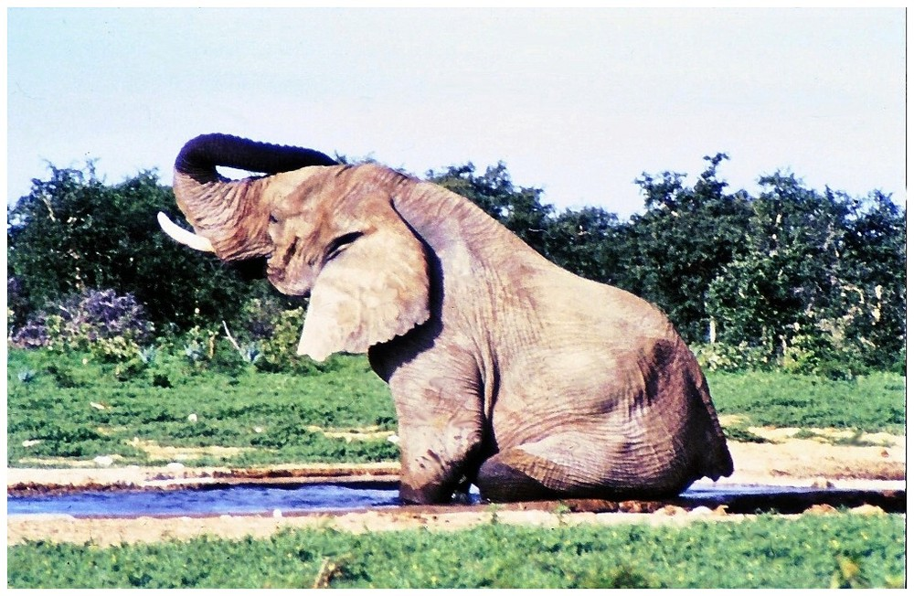 Elefanten-Sitzbadewanne
