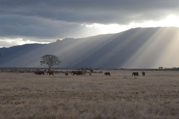 Elefanten Tsavo Ost ( Kenia )