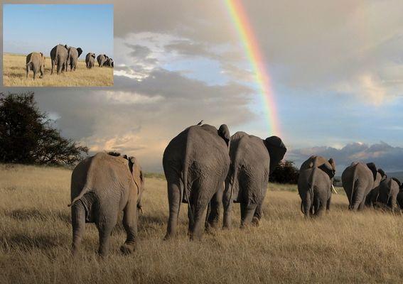 Elefanten unter dem Regenbogen