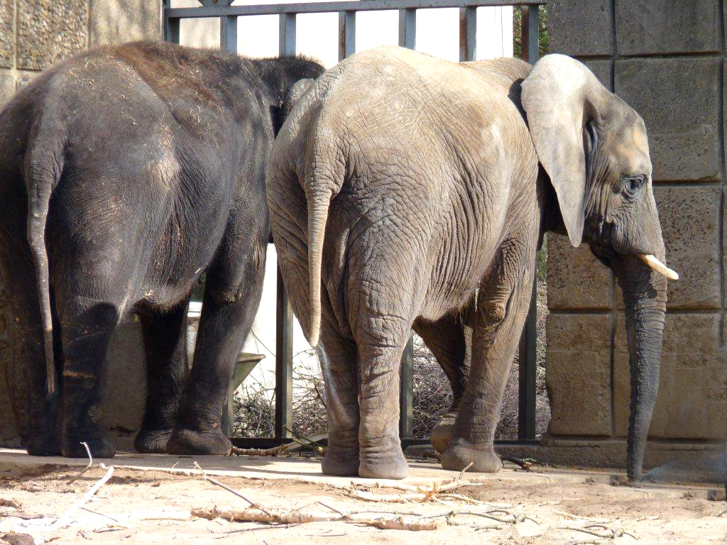 Elefanten - Zoo Magdeburg (7)