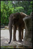 Elefanten.2