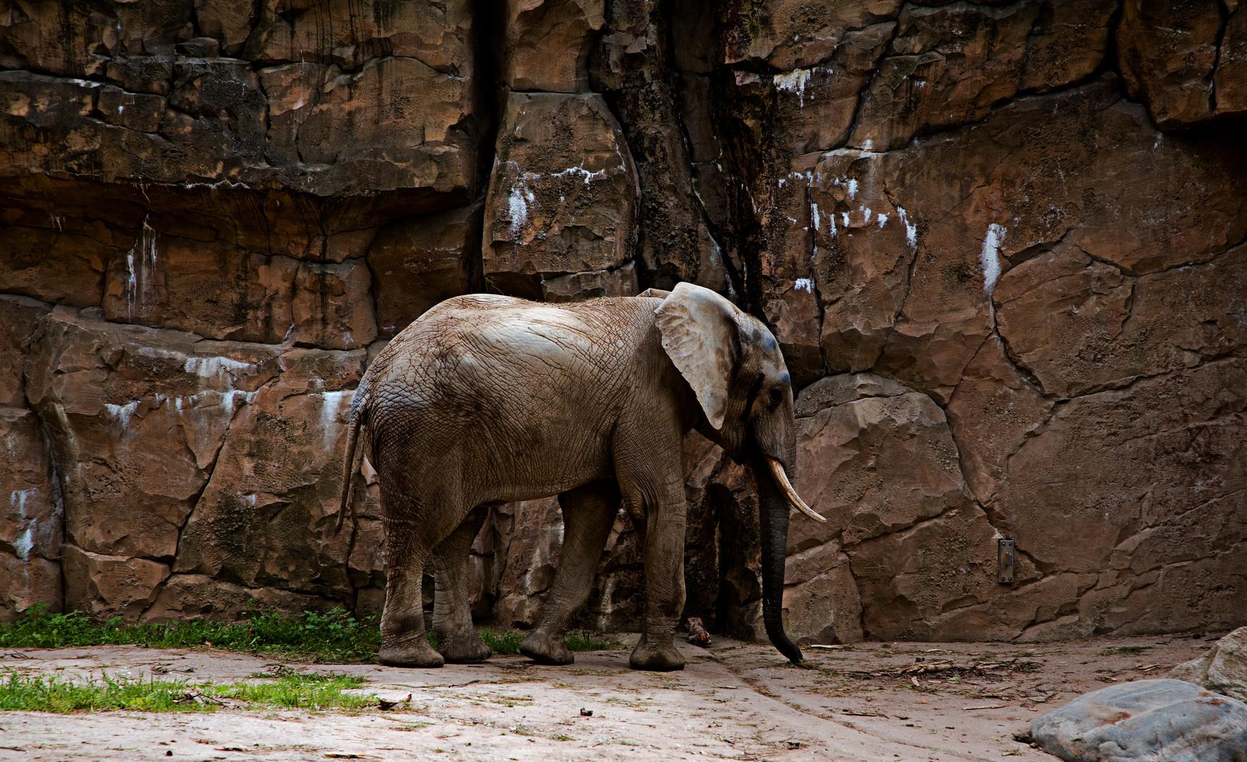 Elefanten.3