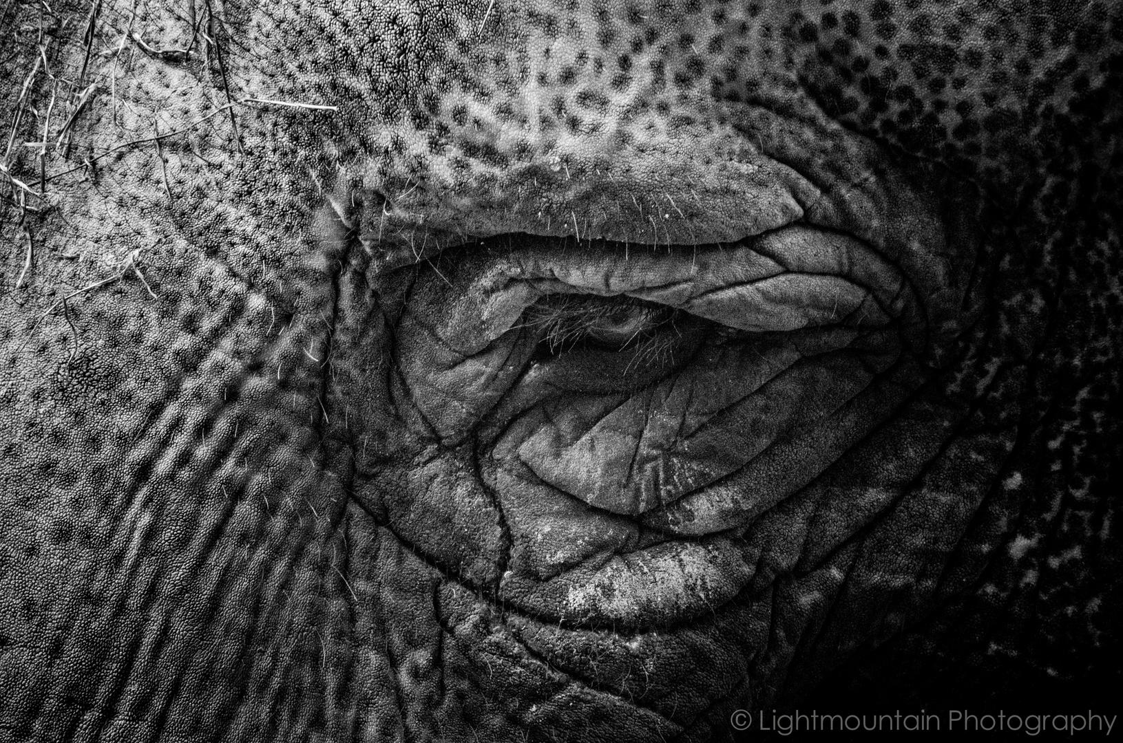 Elefantenaugen