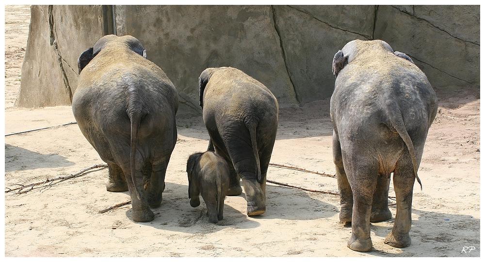 Elefantenausflug