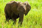 Elefantenbaby im Abendlicht