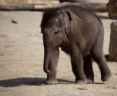 "Elefantenbaby ""Jamuna Toni"" #5"