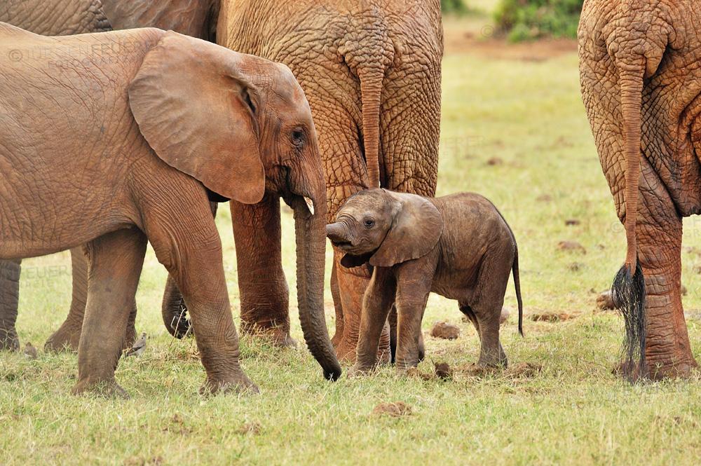 Elefantenbaby sucht Spielkameraden