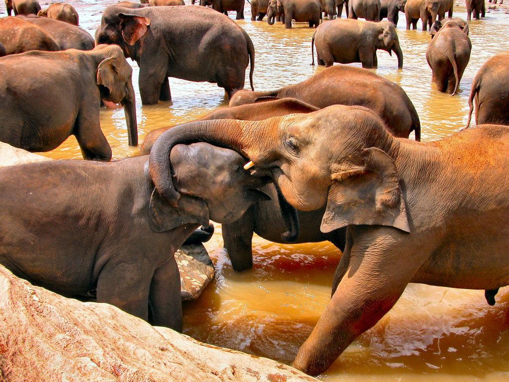 Elefantenbad