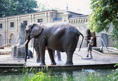 Elefantenbadevergnügen anno dazumal