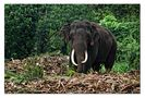 Elefantenbulle von vertigo69